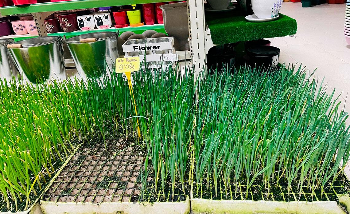 20210305_momento-planteles-hortalizas