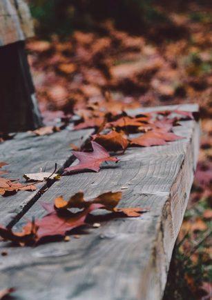 20201106_consejos-huerta-jardin-terraza-noviembre