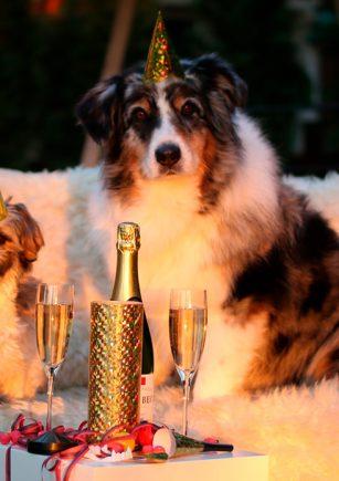 Propósitos para el año nuevo en huerta, jardín y mascotas