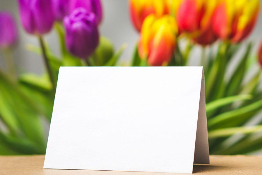plant-flower-petal-tulip-decoration-spring-1209101-pxhere.com